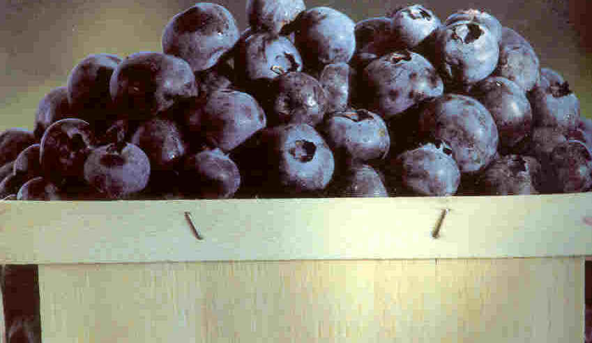 Blueberries contain similar UTI-fighting substances as cranberries.